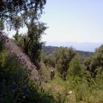 2012-05-12 Verso Calanna2